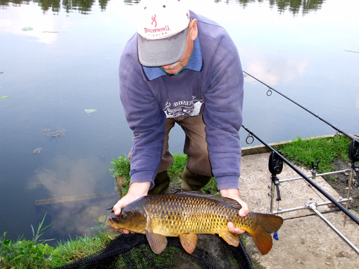 Wallington Hall common carp
